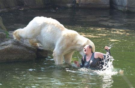 Polarbearattack