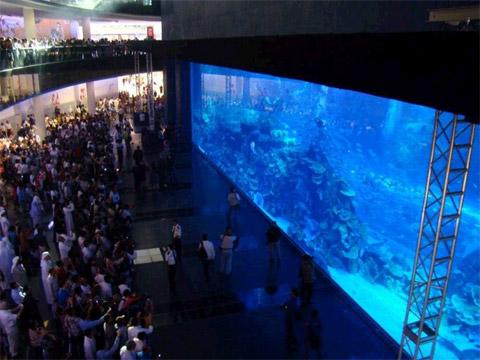kuwait mall aquarium crack