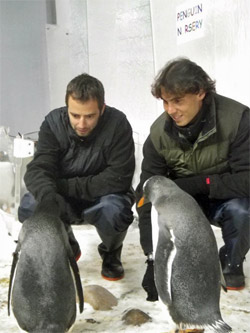 Penguins_nadal
