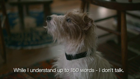 Beginners-terrier