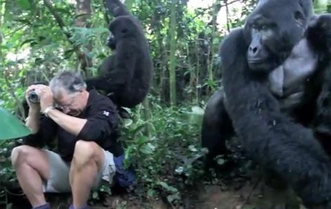 2_gorillas