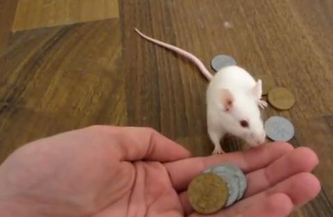 MouseMoney