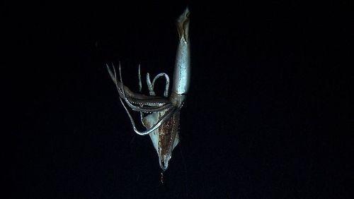 2_squid