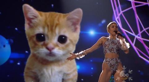Kitten_cyrus