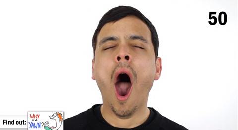 2_yawn