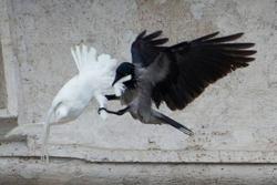 Bird attack_1