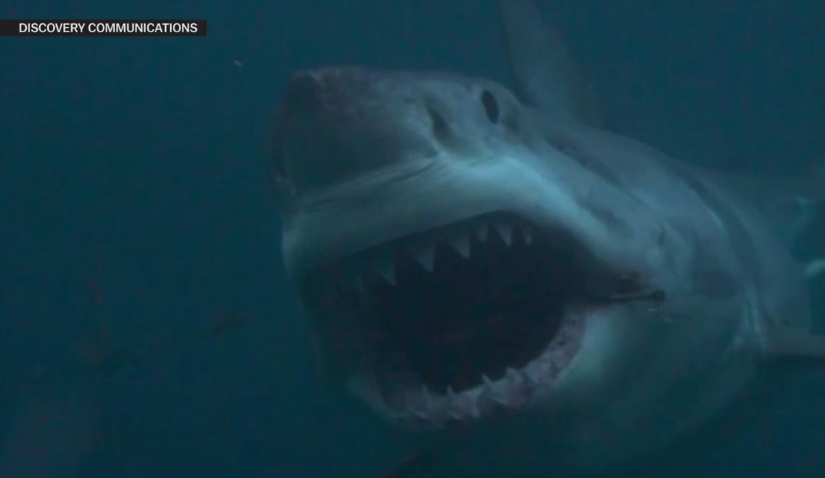 Discovery Channel's 'Shark Week' Debunked: VIDEO | Bulgebull com