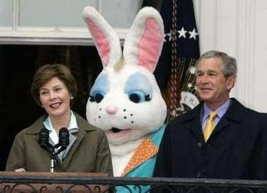Bush_bunny_1